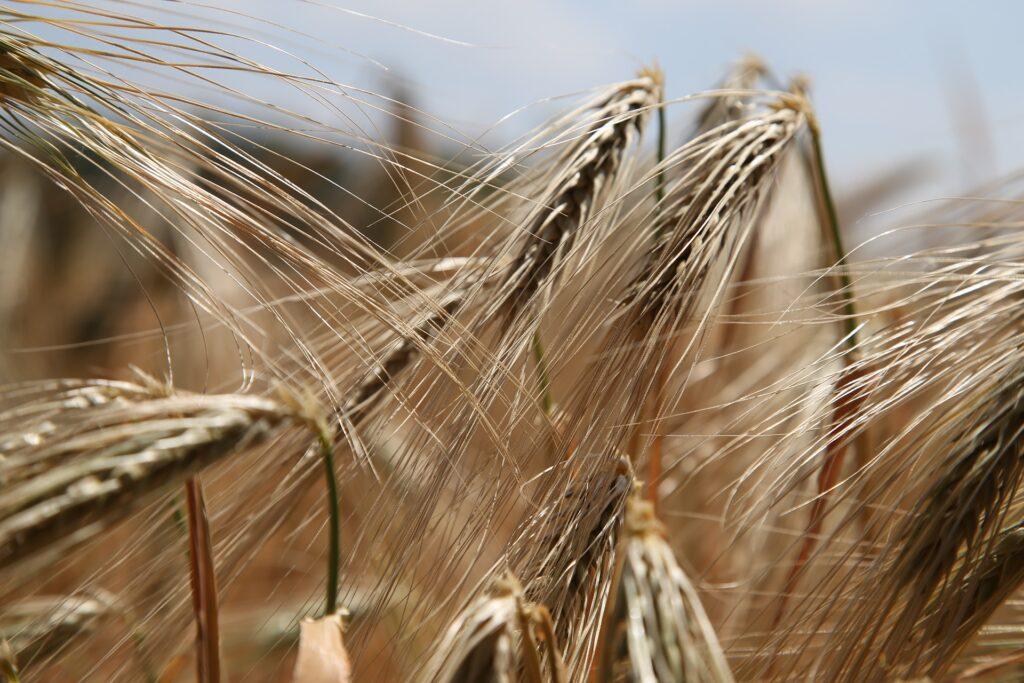farumhus allergener glutenfri